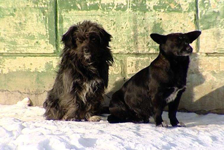Проблему бродячих собак обсудили в благовещенской «Точке кипения»