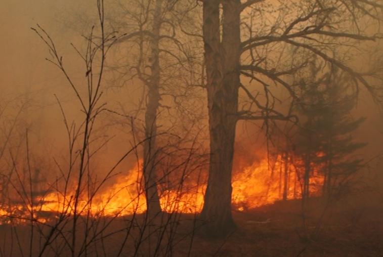Режим ЧС в лесах Свободненского района ввели из-за крупного пожара