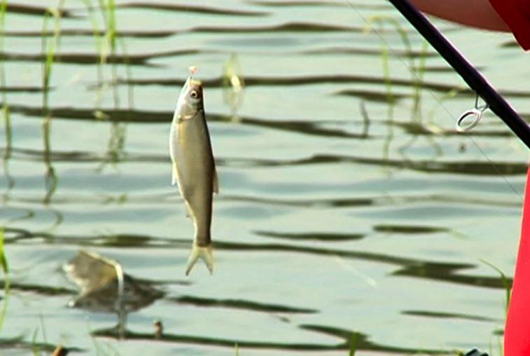 Ловись рыбка: в Тамбовском районе проходят соревнования по рыбной ловле
