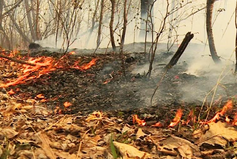 Около 60 человек и 10 единиц техники останавливают огонь в Архаринском районе