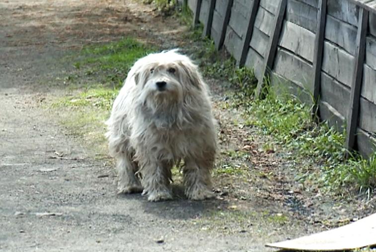 В Тынде и Свободном безнадзорных животных поселят в построенных приютах