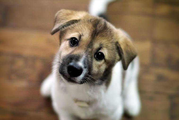 Под присмотром «Острова спасения» будут бездомные собаки в Благовещенске