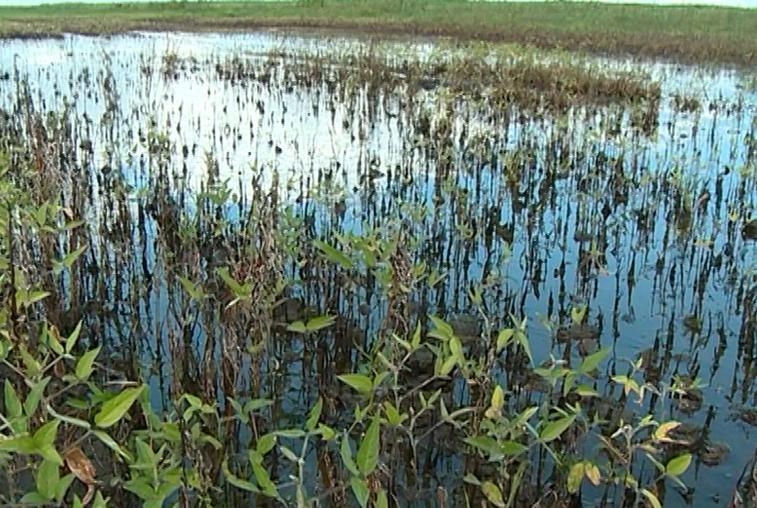 Амурские растениеводы пострадали от стихии