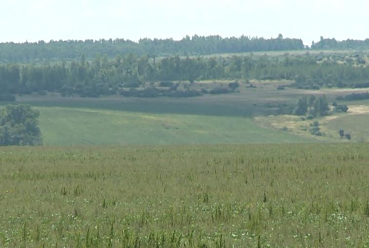 В Приамурье проведут инвентаризацию земель сельхозназначения