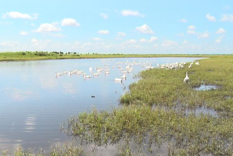 В Приамурье выросла доля сельхозпродукции от местного производителя