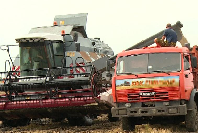 Несмотря на плохие погодные условия, урожайность ранних зерновых выше прошлогодней