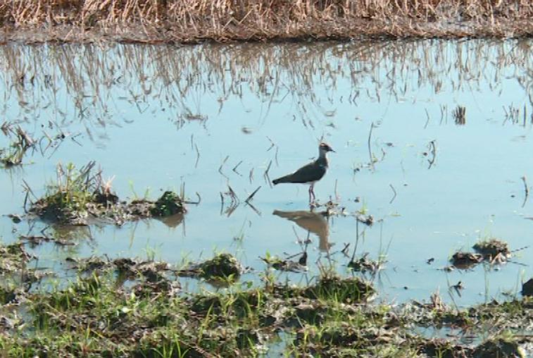 Перо как улика: Ученые идут по следам редких птиц Муравьевского парка