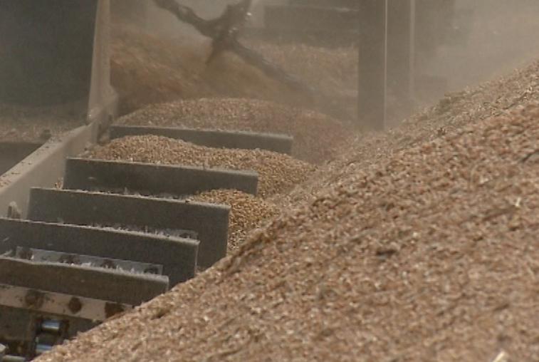 Половина страды позади: амурским растениеводам удалось нарастить темпы уборочной кампании