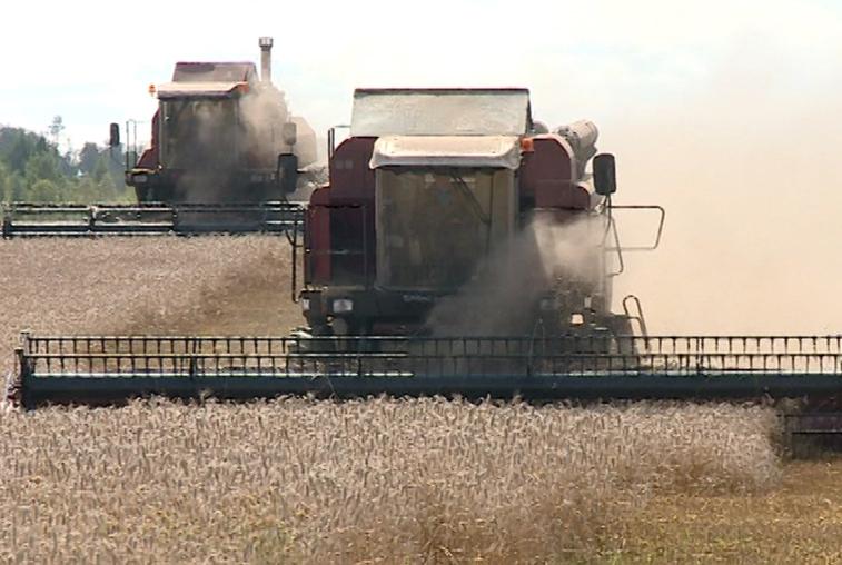 Дождливое лето обернулось для амурских аграриев убытками