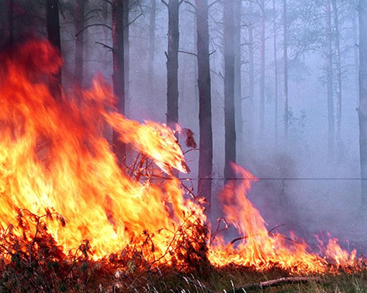 В Приамурье готовятся объявить особый противопожарный режим
