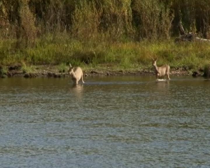 Несмотря на летний паводок, в Норском заповеднике зафиксирован рост численности косуль
