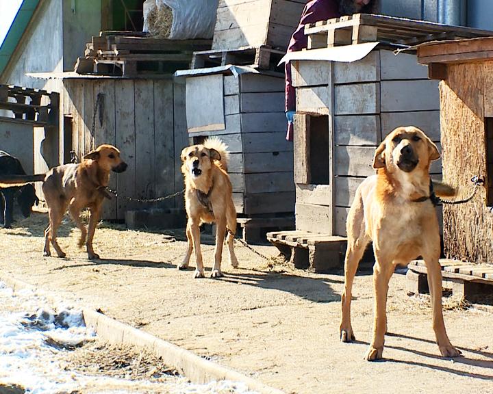 Благовещенские владельцы гаражного массива недовольны соседством с собачим приютом