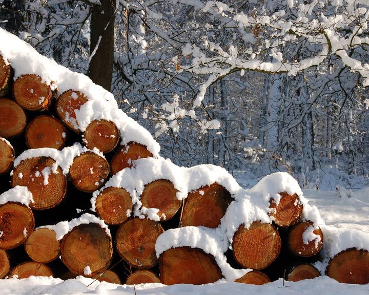 Очистка территории от сухостоя и заготовка дров на зиму: Амурские лесхозы проводят санитарную вырубку