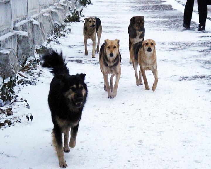 Амурские парламентарии обсудили методы эффективного регулирования численности безнадзорных животных