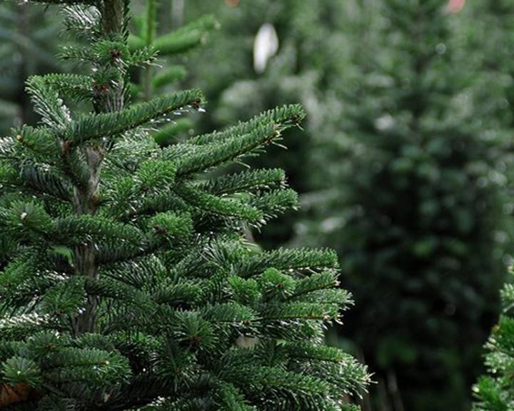 Приближение праздника: Амурчане раскупают новогодние деревья