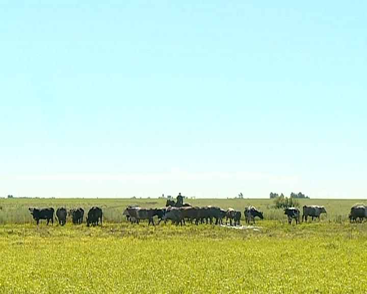 Мест для свободного выпаса скота и сенокошения в Приамурье станет больше