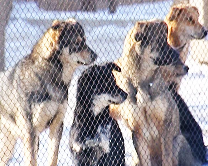 В Благовещенске специальная комиссия проведет мониторинг зоозащитных организаций