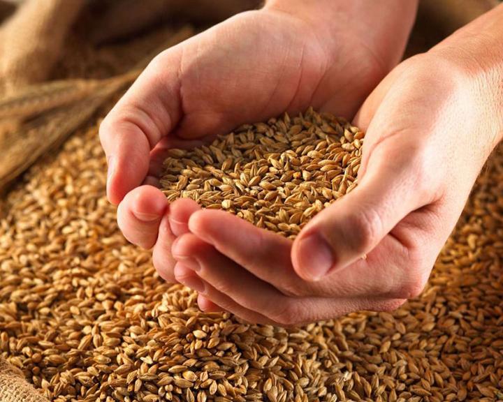 Продовольственная безопасность: Почему отечественные семена лучше импортных?