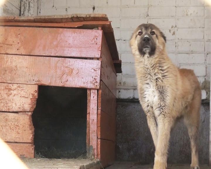 На службу в воинские части Белогорска и Екатеринославки поступило 15 караульных собак
