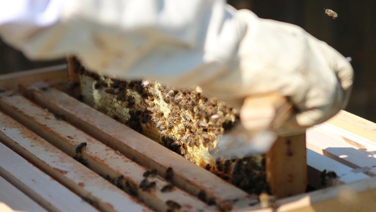 О применении пестицидов и гербицидов амурских пчеловодов будут предупреждать заранее