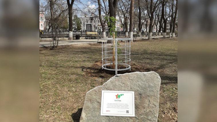 «Тополь Победы» посадили в сквере Центра эстетического воспитания в Благовещенске