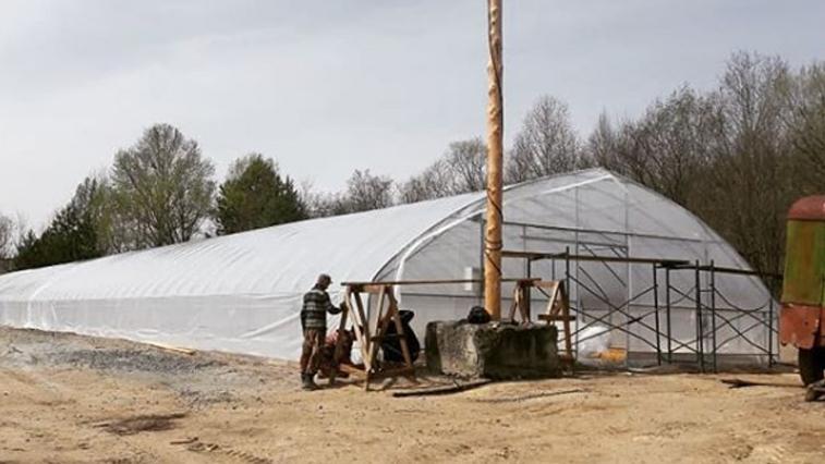 Саженцы для лесопосадок в Приамурье впервые будут выращивать в теплицах