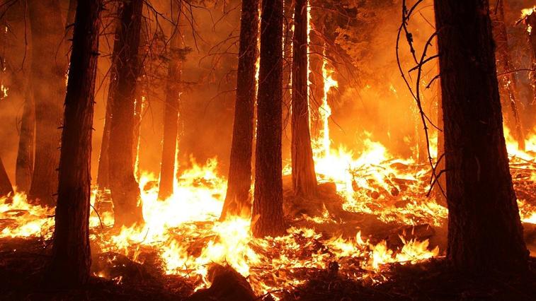 4 природных пожара потушили огнеборцы Амурской области за прошедшие сутки
