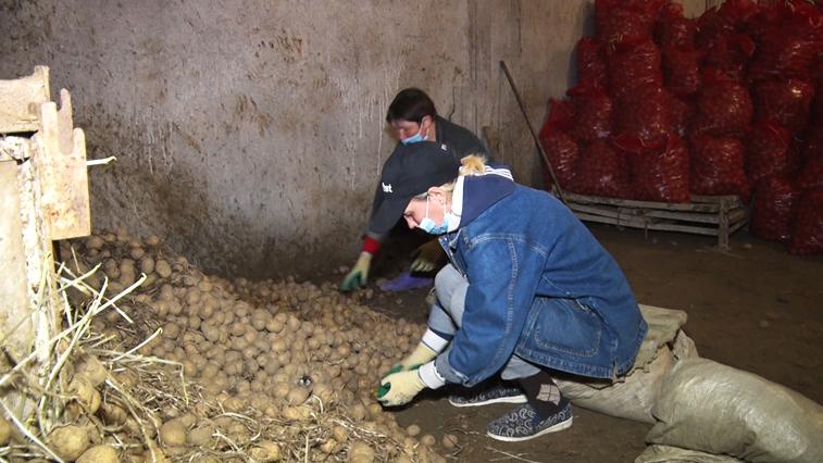 Амурские фермеры приступили к посадке картофеля