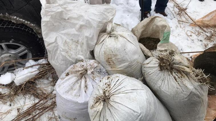 70 килограммов наркотиков изъяли амурские полицейские в Константиновском районе