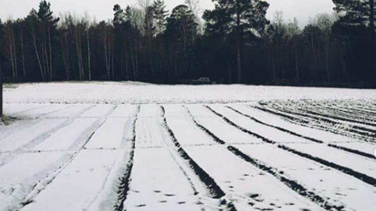 В северных районах Приамурья выпало до 8 сантиметров снега