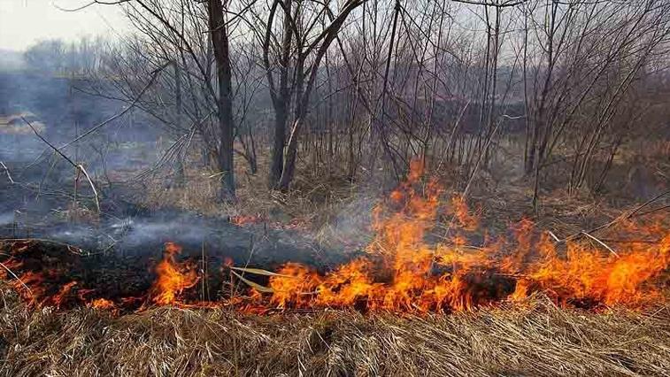 14 палов потушили пожарные Амурской области за минувшие сутки