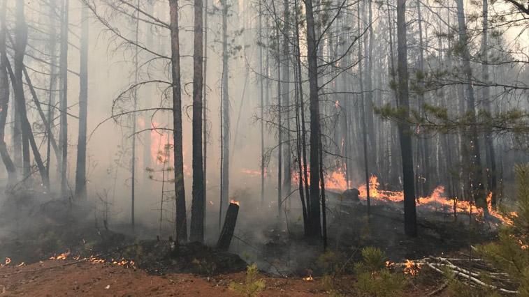 5 природных пожаров и 8 палов потушили амурские пожарные за сутки