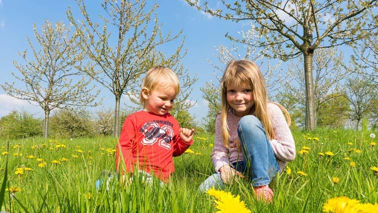 Пенсионный фонд разъяснил порядок получения новых видов поддержки для семей с детьми