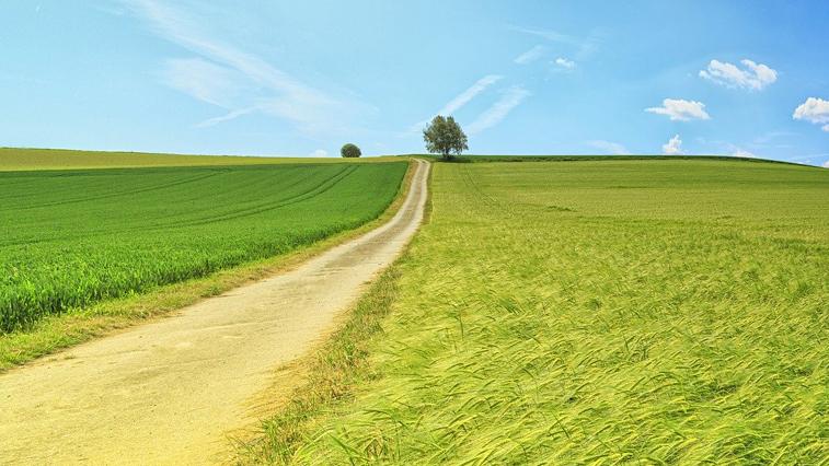 Дальневосточный гектар: 6800 бесплатных наделов выдано в Приамурье