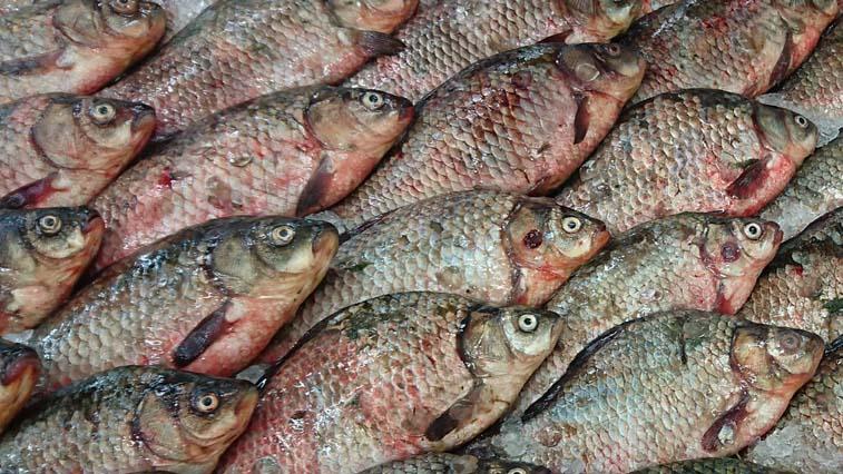 В Благовещенске у уличного торговца изъяли 30 кг свежей рыбы без документов