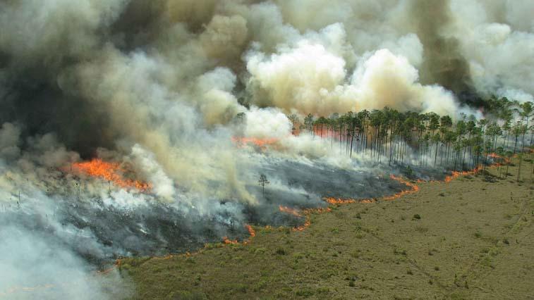 В Зейском районе пятый день тушат лесной пожар у Заречной Слободы