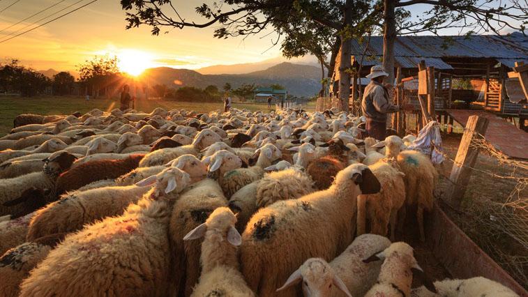 Амурских сельхозпроизводителей приглашают к участию в конкурсе на получение грантов