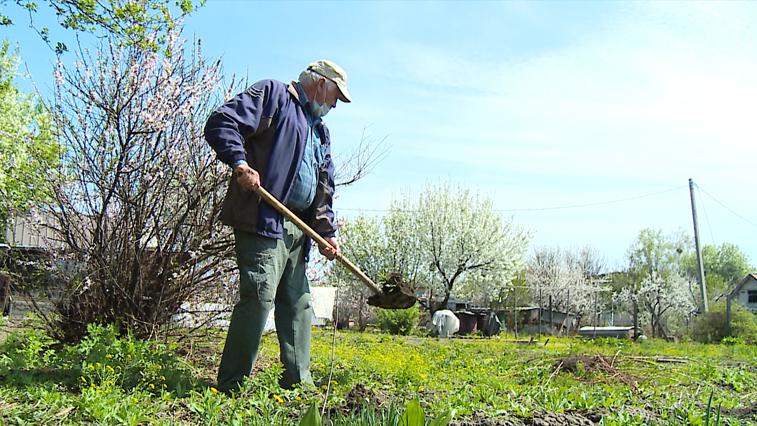 Дачная самоизоляция: амурские огородники не спешат из-за коронавируса оставлять свои участки