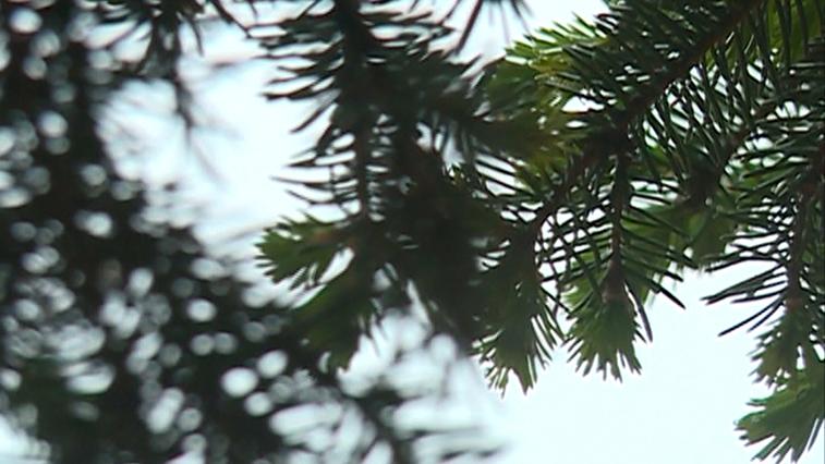 Зеленая реновация: биологи и дендрологи скажут, какие деревья и кустарники оставить в Благовещенске