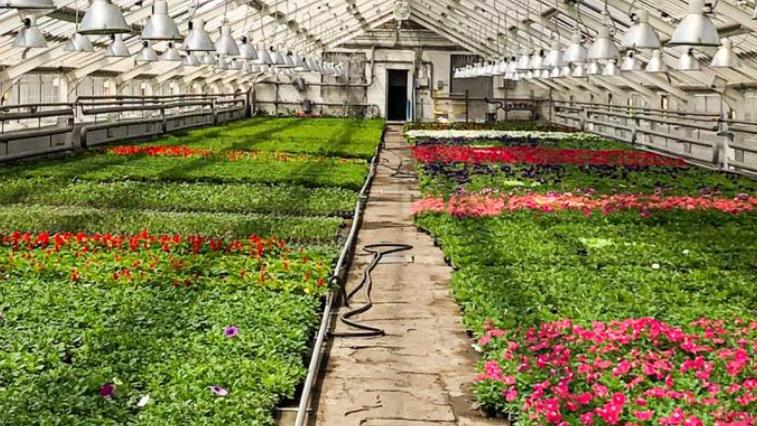 Сад светящихся камней: в Благовещенске создадут необычные клумбы