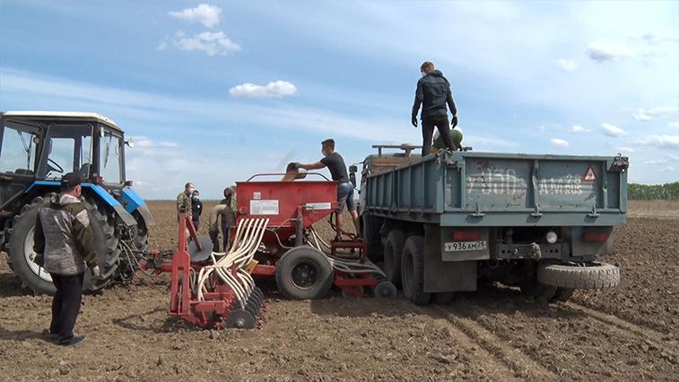 За практикой в поля: студенты-казаки работают на собственном наделе. Не только учатся, но и зарабатывают