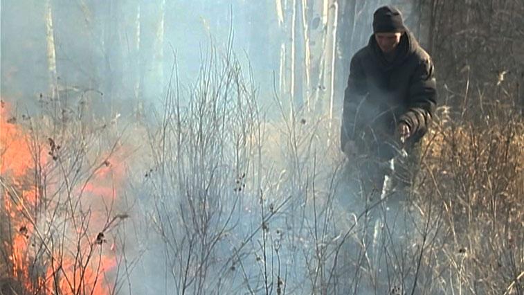 В Приамурье приняли закон, который защитит лес от поджогов