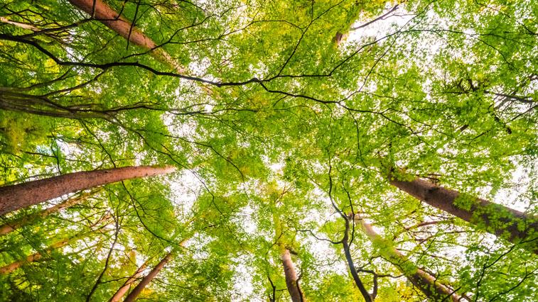В Приамурье появится новый вид особо охраняемых территорий