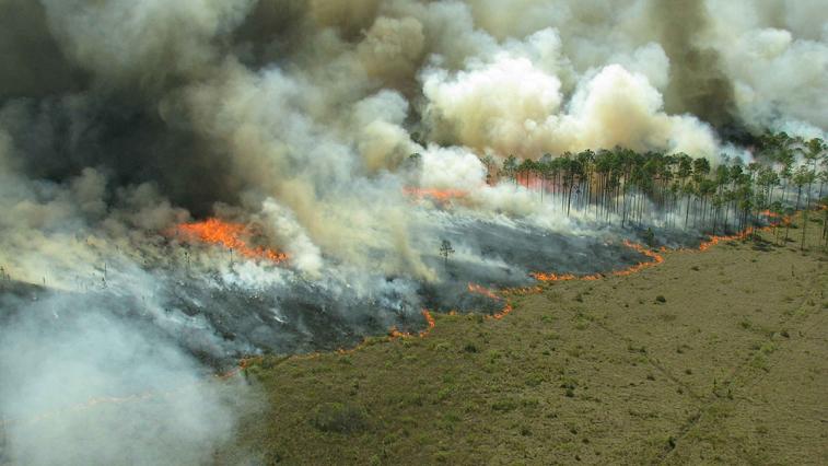 Лесной пожар возле с. Черняево удалось «взять в кольцо» с помощью встречного пала