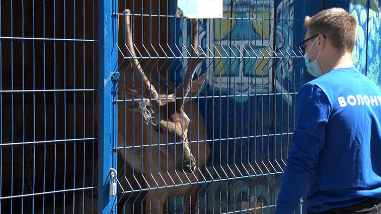 Амурчан призывают поддержать приюты для животных
