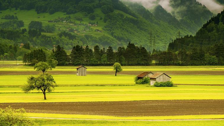 Бесплатный гектар как залог для дальневосточной ипотеки под 2%