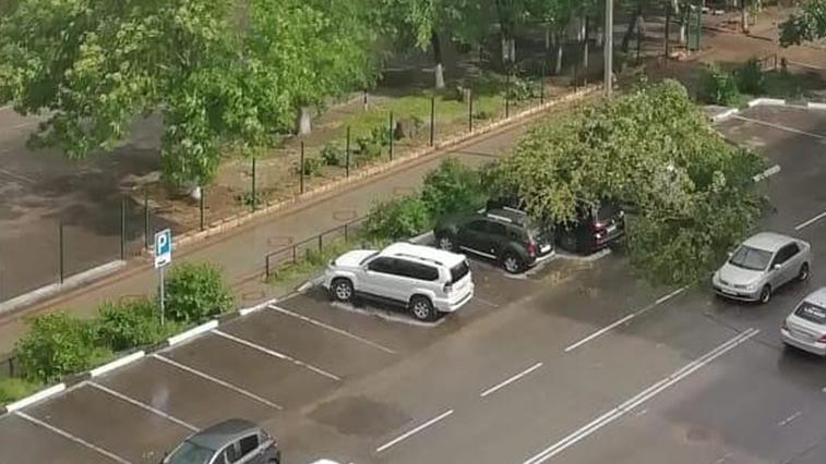 В Благовещенске дерево упало на несколько припаркованных автомобилей