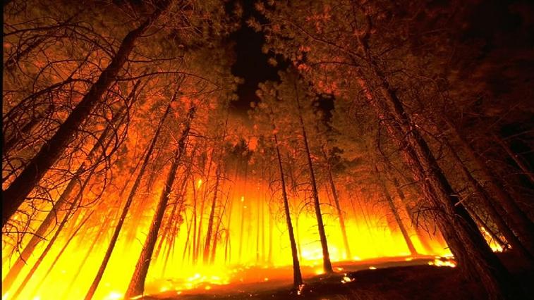 Самый крупный лесной пожар в Амурской области тушили 5 дней