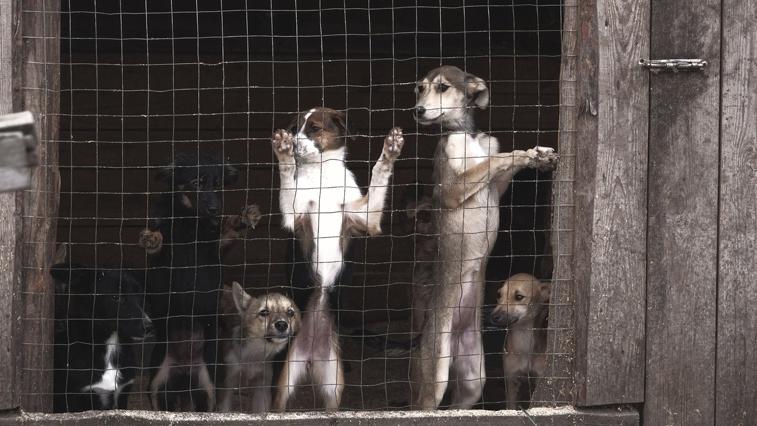 Решить «собачий вопрос»: до конца года амурские муниципалитеты должны создать сеть служб для отлова бродячих животных