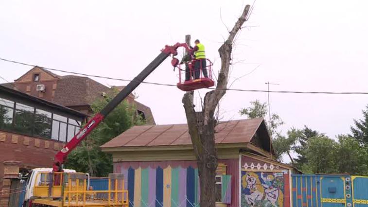 В Благовещенске впервые проведут инвентаризацию всех городских деревьев